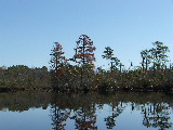Trees along Pond off of North Landing River (Kayak Virginia Beach Images © Paul Perusse)