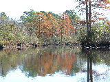 Trees changing color along Pond off of North Landing River (Kayak Virginia Beach Images © Paul Perusse)