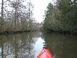 North side of Ashville Bridge Creek (Kayak Virginia Beach Images © Paul Perusse)