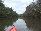 Looking South on Hells Point Creek (Kayak Virginia Beach Images © Paul Perusse)