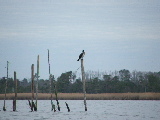 Duck blind on Back Bay Virginia (Kayak Virginia Beach Images © Paul Perusse)