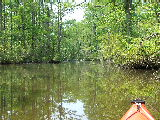 Looking west up Milldam Creek (Kayak Virginia Beach Images © Paul Perusse)