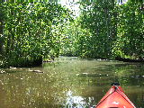 Milldam Creek (Kayak Virginia Beach Images © Paul Perusse)