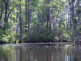 Spanish Moss covered trees (Kayak Virginia Beach Images © Paul Perusse)