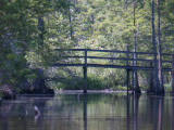 Milldam Creek Boardwalk (Kayak Virginia Beach Images © Paul Perusse)
