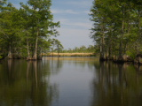 Milldam Creek View (Kayak Virginia Beach Images © Paul Perusse)