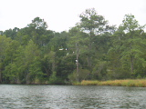 Egrets in tree (Kayak Virginia Beach Images © Paul Perusse)